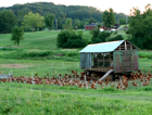 Hens on Pasture